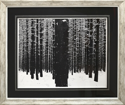 Picture of A Snowy Forest GL01262