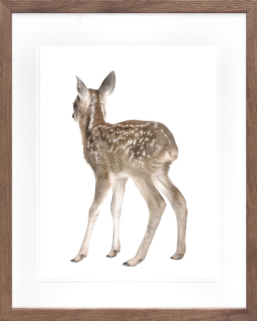 Picture Depot | behind-deer