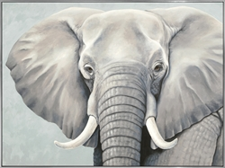 Picture of African Elephant                            OP1391-1